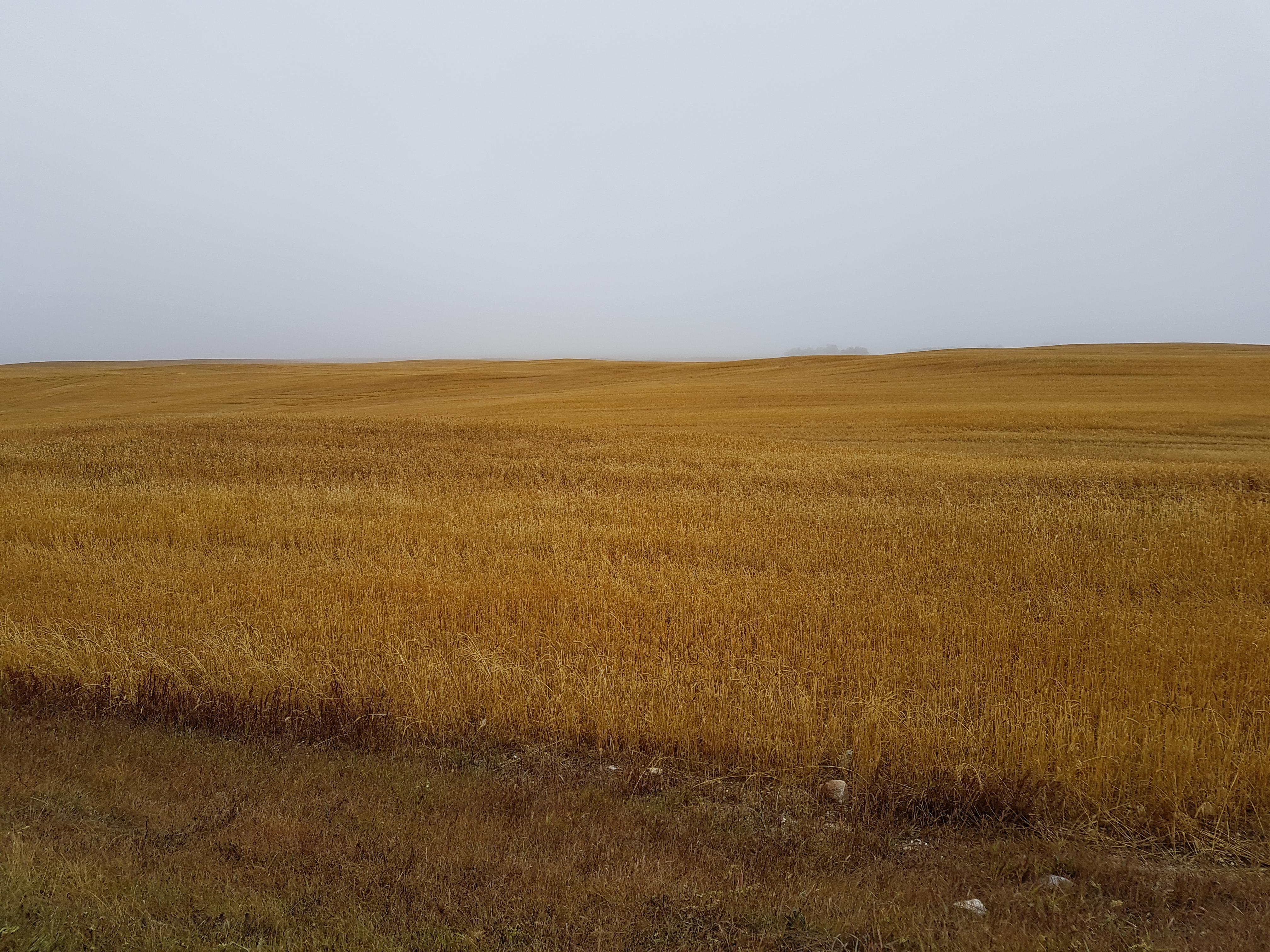 Yaganiski land